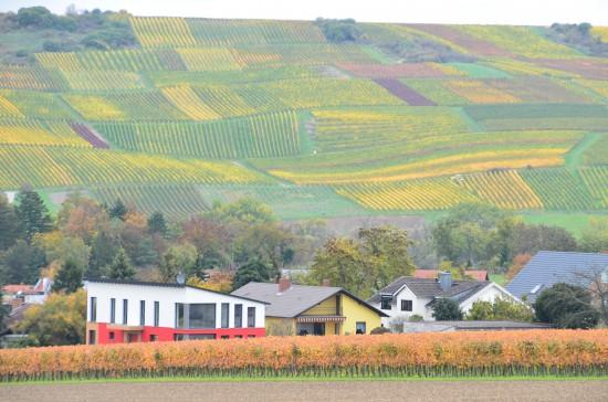 27.10.2013 LiSTE Weinbergswanderung (22)